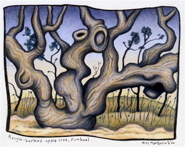 'Rough barked apple tree, Gumboil'(2004) colour pencil and charcoal on paper